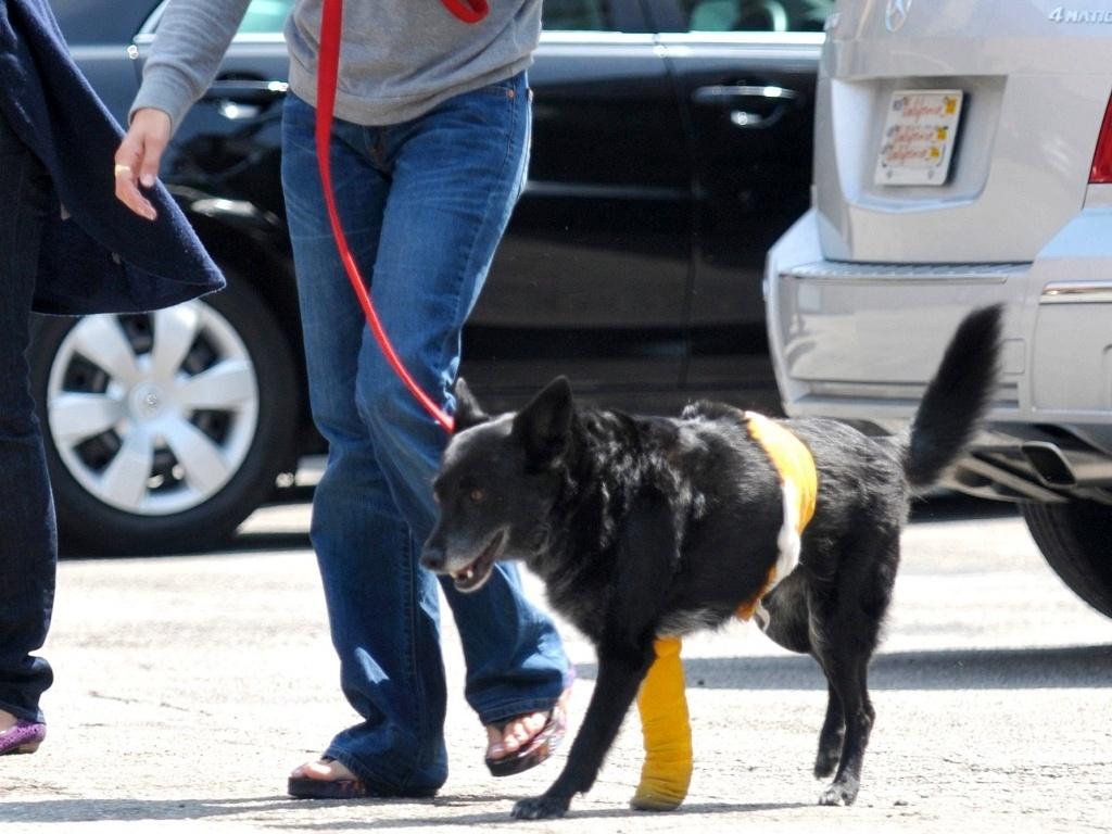 A atriz Penelope Cruz e seu cão Vino saem de veterinário em Los Angeles (24/4/2010)