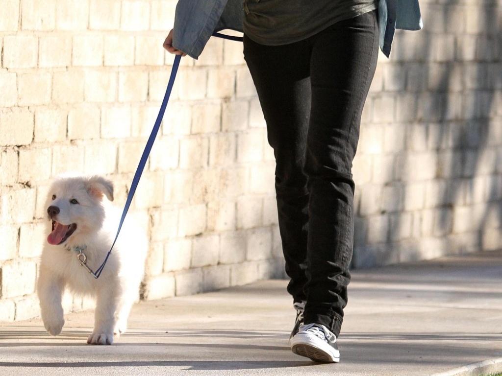 A cantora Miley Cyrus e seu cão Mate andam por rua de Toluca Lake, na Califórnia (27/1/2010)