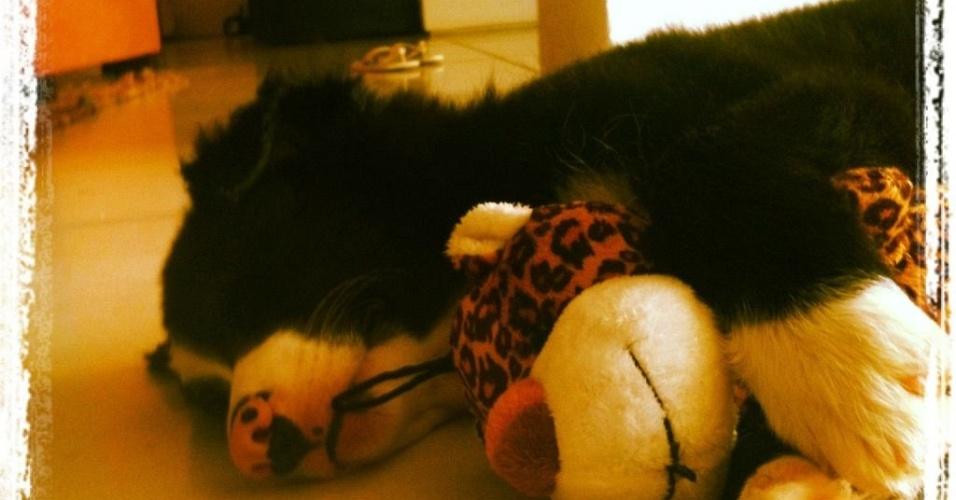 Luciano Huck posta foto do novo cachorro da família (30/10/2011)