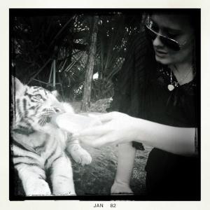 Adele dá mamadeira a tigrinho