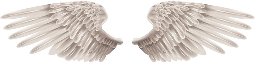 asas de anjo ficam - photo #11
