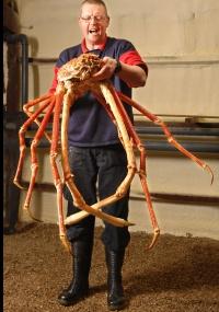 Um caranguejo gigante será exibido em aquário de Birmingham, no centro da Grã-Bretanha