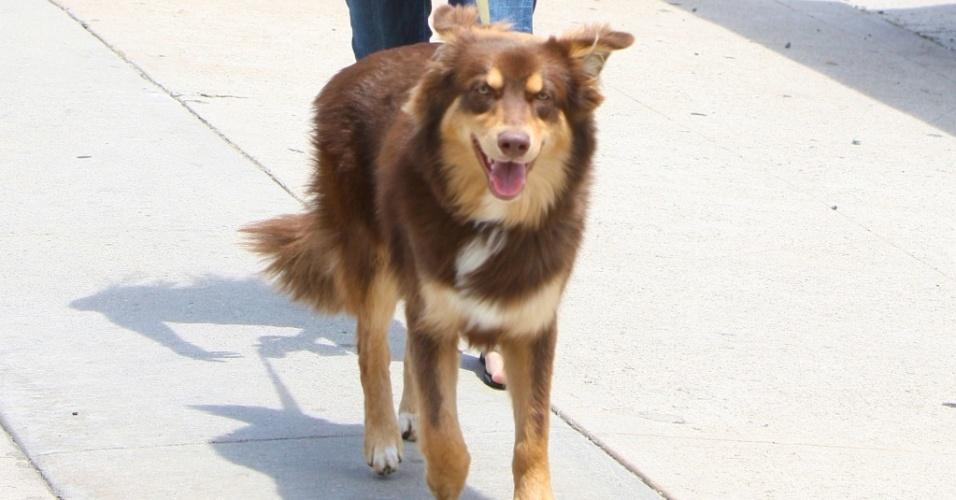 A atriz Amanda Seyfried passeia com seu cão Finn pelas ruas de Los Angeles (2/6/2010)