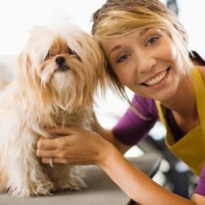 Presença de animais no trabalho promove maior interação entre os funcionários, aponta estudo - Thinkstock